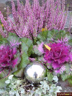 murgröna Dream Garden, Garden Art, Garden Design, Purple Garden, Colorful Garden, Home Landscaping, Front Yard Landscaping, Beautiful Gardens, Beautiful Flowers