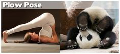 What I think I look like doing yoga. What I actually look like. Funny Yoga Pictures, Funny Baby Images, Best Funny Photos, Fail Pictures, American Funny Videos, Funny Cat Videos, Animal Yoga, Indian Funny, Image Fun