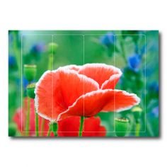 Farbenfrohe Ordnerrücken verschönern den Alltag im Büro und sind eine tolle Dekoration für zur Hause. 3,90€