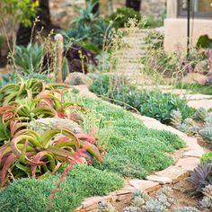 Desert Landscape Ideas for New Gardeners