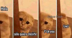 """463 Me gusta, 2 comentarios - Gatos Cool (@gatoscooloficial) en Instagram: """". . . . #memesdegatoscool #gatoscool😸 #gatos_cool #fuckyo"""""""