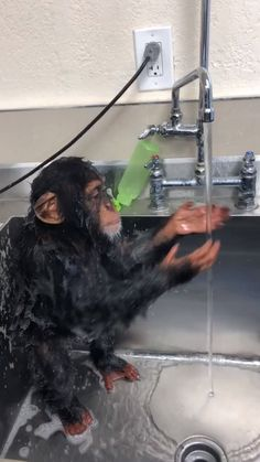 Baby chimp taking a shower is part of Cute baby animals - 100 points Cute Funny Animals, Cute Baby Animals, Animals And Pets, Funny Monkeys, Cute Creatures, Beautiful Creatures, Animals Beautiful, Chimpanzee, Animal Memes