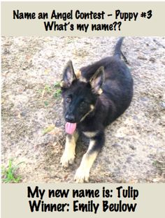 And here's Winner #3 from our Name An Angel #ServiceDog contest!