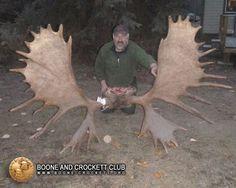 World Record Moose