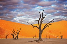 DEADVLEI, NAMIBIA The black, dead trees against the orange sand dunes in the Namib-Naukluft National Park make the Deadvlei landscape look like a scene out of a painting.