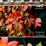 Fall+flowers