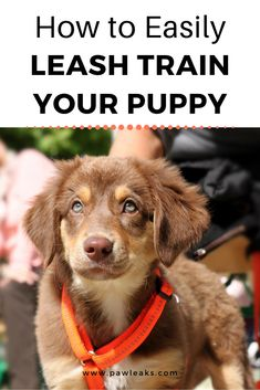 Teaching a new puppy the concept of a leash training takes time and they should be properly introduced. Walking nicely on a leash doesn't come naturally Puppy Training Tips, Training Your Puppy, Puppy Leash Training, Training Shoes, Puppies Tips, Dogs And Puppies, Westie Puppies, Doggies, Dog Leash