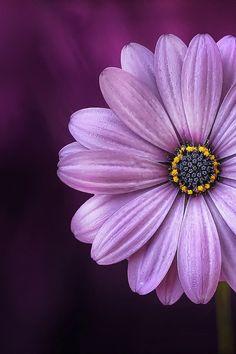 Free stock photo of nature, purple, petals, plant