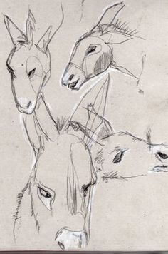 mules sketches...