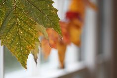 dip leaves into melted wax. make a garland or hang up with washi tape.