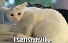 i sense evil - Imgur