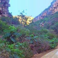 Kransvleikloof lush vegetation in a sheltered environment
