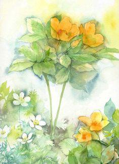 「連休は」記事の画像 Watercolor Flowers, Watercolor Paintings, Watercolor Ideas, Botanical Illustration, Illustration Art, Illustrations, Evening Primrose, Amazing Flowers, Flower Vases
