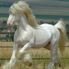 Records in the world: The most beautiful horse in the world