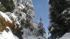 Christmas Snowfall in SHimla