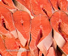 Equally as menacing as the potential release of genetically-modified (GM) salmon into the wild, factory fish farms are a modern scourge responsible for killing off droves of native fish species all around the world. http://www.naturalnews.com/040631_farmed_salmon_GMO_sustainable_fishing.html