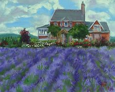 """""""Yamhill County, Oregon """" love the lavender fields"""