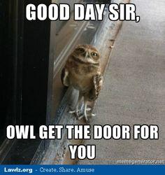 owl meme - Google Search