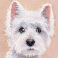 """Dogs Westie """"Beautiful"""" Limited Edition Print (Original Painting)by Sue Barratt West Highland Terrier, Westies, Bichons, Animal Paintings, Animal Drawings, Gif Animé, White Dogs, Dog Portraits, Tatoo"""