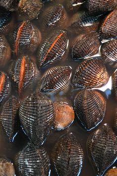 Fresh catch at Tokyo's Tsukiji fish market