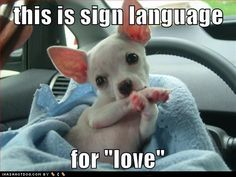 "cute puppy pictures - this is sign language    for ""love"""