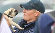 The Princess and the Pug: Zara Phillips gets up close and personal with pet dog at the Burghley Horse Trials