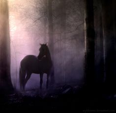 Deep in the forest, a horse awaits you..