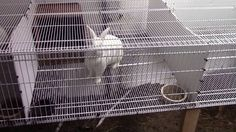 Installing the Wire Shelf Rabbit Cage