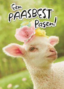 Een paasbest Pasen! #Hallmark #HallmarkNL #Pasen #paasdagen #paashaas #paaseieren #lente