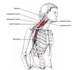 Easy Stretches to Release Tension in the Neck & Shoulders Shoulder Stretching Exercises, Neck And Shoulder Stretches, Neck Exercises, Easy Stretches, Neck And Shoulder Pain, Shoulder Muscles, Neck Stretches, Neck Pain, Acupressure