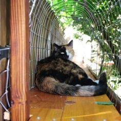 Easy DIY Cat Enclosure