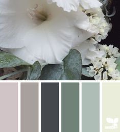 flora hues - design seeds
