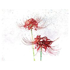 Spider Lilies Abstract Photography Art Print ($30) via Polyvore featuring home, home decor, wall art, photographic wall art, abstract wall art, abstract home decor and photography wall art