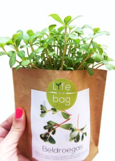 Beldroegas Life in a bag