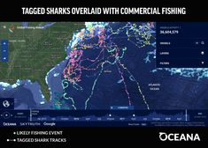 Oceana and Collaborators Launch Interactive Shark Map for Shark Week The Future Is Now, University Of Miami, Interactive Map, Shark Week, Data Analytics, Big Data, Machine Learning, Sharks, Overlays