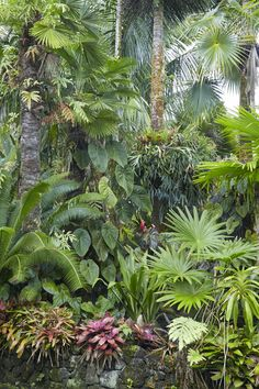 Palms created a layered look in a tropical garden.