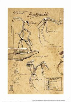 animals fantasticos (Bowtruckle, fantastic beasts and where to find them, fantastic beasts, creatures) Art Harry Potter, Harry Potter Drawings, Harry Potter Universal, Harry Potter Printables, Beast Creature, Desenhos Harry Potter, Fantastic Beasts And Where, Mythological Creatures, Book Of Shadows