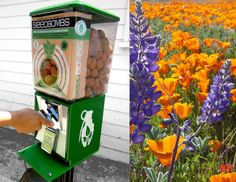 What an amazing idea!  Refurbished gumball machines sell 'greenaids' or flower bombs (get it- grenades?).  You can toss these balls of regional-appropriate plant seeds & compost in any empty lot, sidewalk crevice or garden pot! :)   -kwa