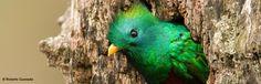 Defensores de la Naturaleza  Guatemala