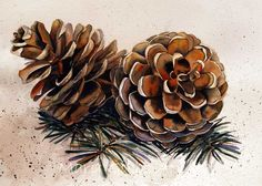 Crafts Pinecones Art of Mary Gibbs: