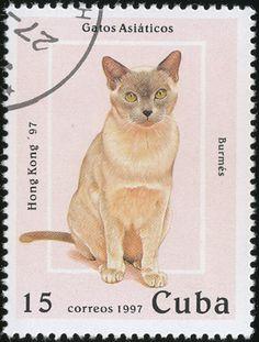 Cuba Cat Stamps 1997 - Burmese