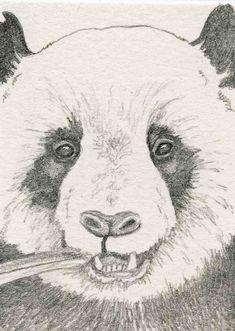 ACEO ATC Panda Bear Wildlife Art Original Pencil Painting-Carla Smale