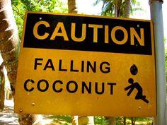 ATTENZIONE caduta noci di cocco. Sembra ridicolo, ma a mio fratello è capitato!!