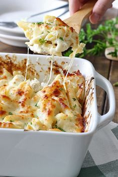 Creamy, cheesy packed chicken Alfredo pasta bake with three kinds of cheese and plenty to go around. Lots of gooey, stringy cheese in this fall or spring casserole! Recipe via thecookingjar.com.