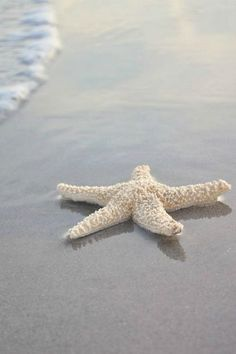 LOVED searching for & Finding Starfish on the beach in Belgium when I was a kid!!! <3