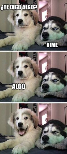 Just a little husky? Check out this list of the best exercises for the Siberian - Funny Husky Meme - Funny Husky Quote - The post Just a little husky? Check out this list of the best exercises for the Siberian appeared first on Gag Dad. Funny Animal Quotes, Animal Jokes, Funny Animal Pictures, Cute Funny Animals, Funny Cute, Funny Images, Cute Dogs, Fat Funny, Animal Pics