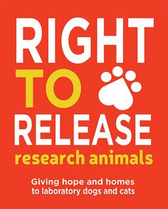 Beagle Freedom Project's important legislative push to enact laws that would ensure research facilities can give dogs and cats used in laboratory testing a chance at a life after research.