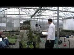 Medium growing CA native plants