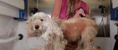 Friseur rettet Hundeleben - Unglaublich!