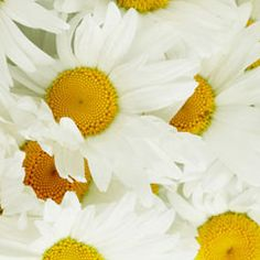 Chamomile Skin Brightening Facial Mask recipe